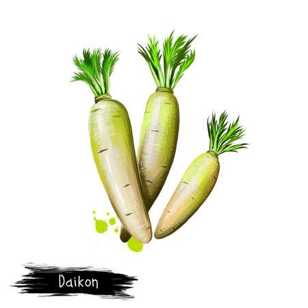 大根やダイコン ダイコンが白い背景で隔離のデジタル アート イラスト。有機健康食品。緑の野菜。手描き植物のクローズ アップ。アート イラスト 写真素材