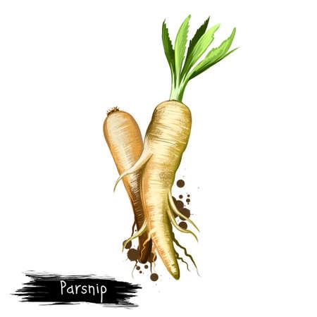 Digitale kunstillustratie van pastinaak of Pastinaca-sativa die op witte achtergrond wordt geïsoleerd. Biologisch gezond voedsel. Groene groente. Hand getrokken plant close-up. Clip kunst illustratie. Grafisch ontwerpelement Stockfoto - 85889696