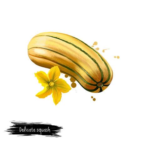 Digitale kunstillustratie van Delicata-pompoen, Cucurbita-pepo die op witte achtergrond wordt geïsoleerd. Biologisch gezond voedsel. Gele groente. Hand getrokken plant close-up. Clipart illustratie. Grafisch ontwerpelement Stockfoto - 85944866