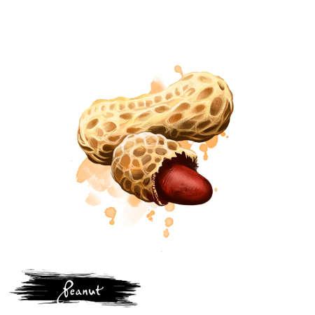 Hand getrokken illustratie van Pinda of Arachis hypogaea geïsoleerd op een witte achtergrond. Biologisch gezond voedsel. Digitale kunst met verf spatten druppels effect. Grafische illustraties voor ontwerp, web en print Stockfoto