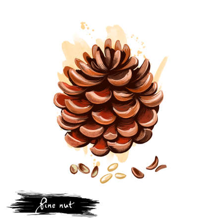 Hand drawn illustration of Pine nuts with stone pine cone isolated on white background. Organic healthy food. Digital art with paint splashes drops effect. Graphic clip art for design, web, print.
