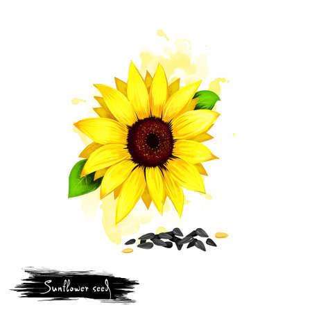 Bergeben Sie gezogene Illustration von Sonnenblumensamen oder Helianthus Annuus, die auf weißem Hintergrund lokalisiert werden. Organisches gesundes Essen. Digital-Kunst mit Farbe spritzt Effekt. Grafik-ClipArt für Design, Web und Print. Standard-Bild - 86031701