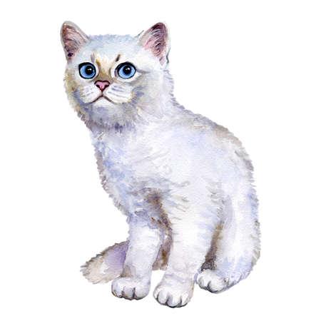 Waterverf dicht omhooggaand portret van populair Brits shorthair zilveren die katje op witte achtergrond wordt geïsoleerd. Zoet zeldzaam zilverkleurig chinchilla kleurentoonland. Hand getrokken huisdier. Wenskaart ontwerp. Clip art