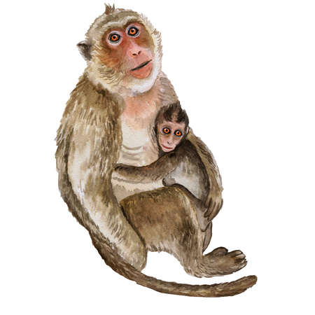 Watercolor closeup portrait of Rhesus macaque or Macaca mulatta with baby isolated on white background. Hand drawn cute monkeys, zoo pet. Greeting card, encyclopedia design. Clip art for web, print