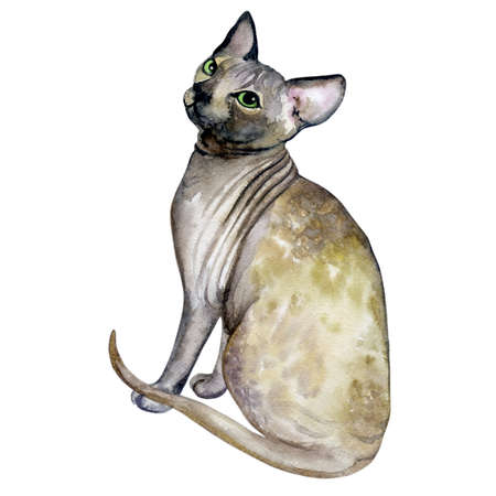 Watercolor close up portrait of popular hairless Canadian Sphynx cat breed isolated on white background. Sweet cat with no fur coat. Hand drawn pet. greeting card design. Graphic clip art illustration Фото со стока