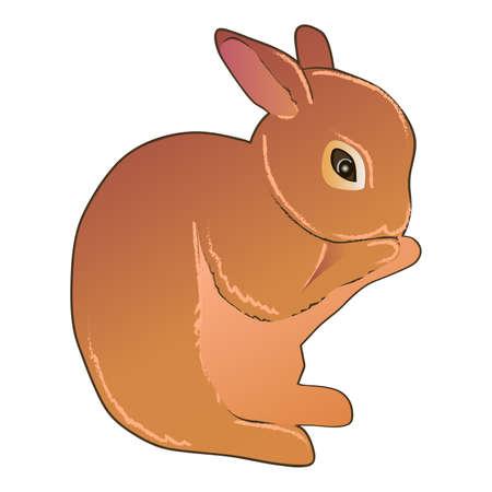 Hand drawn digital drawing of cute little fluffy bunny.