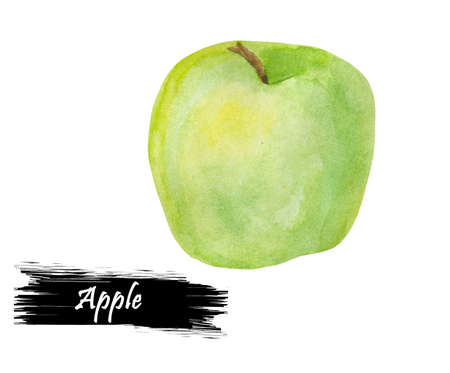 Watercolor hand drawn green apple isolated on white background. Fresh organic fruit drawing. Botanical realistic look illustration. Pomaceous fruit, apple tree offspring, fetus. genus Malus domestica