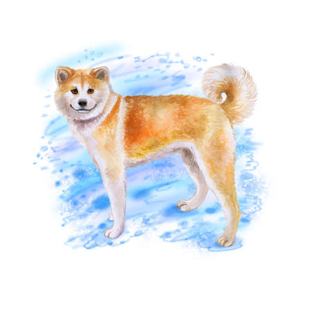 Watercolor closeup portrait of red Japanese Akita dog isolated on blue background. funny dog smiling. Hand drawn sweet home pet. Popular large breed dog. Greeting card design. Clip art illustration 版權商用圖片