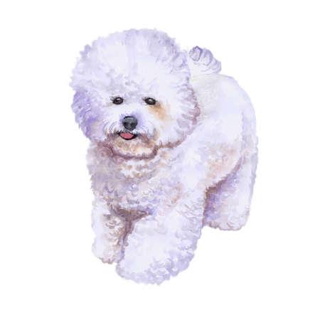 白い背景に分離されたフランス語ビションフリーゼ犬のポートレート、水彩のクローズ アップ。ふわふわおもちゃの犬。手描きの甘いホーム ペット