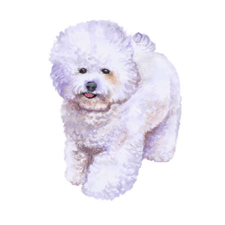 Watercolor closeup portrait of french bichon frise dog isolated on white background. fluffy toy dog. Hand drawn sweet home pet. Popular small breed dog. Greeting card design. Clip art illustration Фото со стока