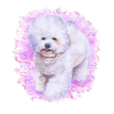 Retrato de primer plano de acuarela de francés bichon frise perro aislado sobre fondo rosa. perro de juguete esponjoso Dibujado a mano dulce hogar mascota. Perro de raza pequeña popular. Diseño de tarjetas de felicitación. Ilustración del arte de clip