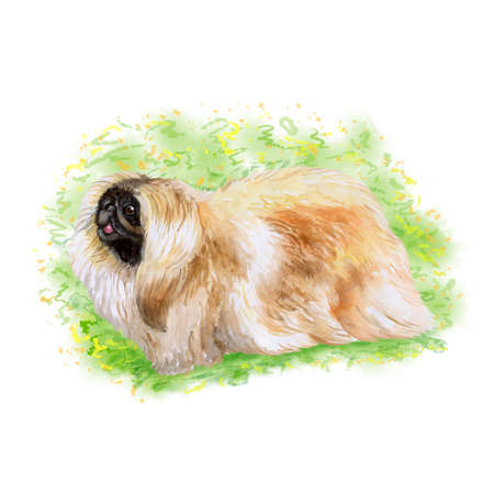 Watercolor closeup portrait of chinese pekingse dog isolated on green background. fluffy toy dog showing tongue. Hand drawn sweet home pet. Popular small breed dog. Greeting card design. Clip art