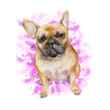 Acuarela closeup retrato de perro de bulldog francés aislado sobre fondo de color rosa. Perro de Frenchie del shorthair. Negro enmascarado. Animal doméstico casero dulce dibujado mano. Perro de raza pequeña popular. Diseño de la tarjeta de felicitación. Clipart Foto de archivo