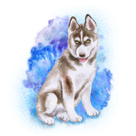 Watercolor closeup portrait of Husky puppy isolated on blue background. funny dog showing tongue. Hand drawn sweet home pet. Popular large sled-type breed dog. Greeting card design. Clip art work