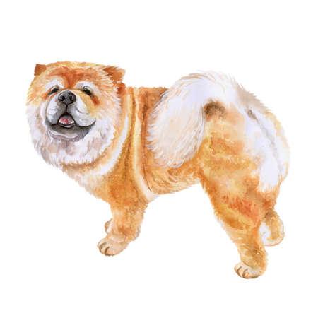 白い背景で隔離のチャウチャウ犬のポートレート、水彩のクローズ アップ。面白い犬示す舌。手描きの甘いホーム ペット。人気のある大型犬のポー