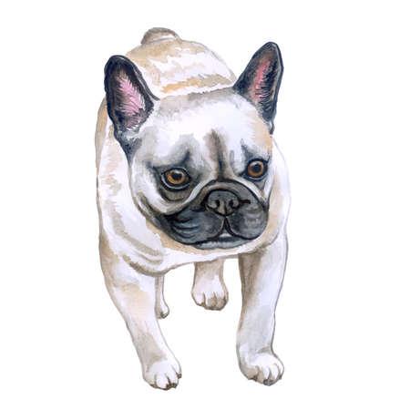 Acuarela closeup retrato de perro de bulldog francés aislado sobre fondo blanco. Perro de Frenchie del shorthair. Negro enmascarado. Animal doméstico casero dulce dibujado mano. Perro de raza pequeña popular. Diseño de la tarjeta de felicitación. Clipart