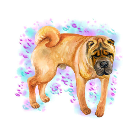 Watercolor closeup portrait of cute wrinkled chinese Shar Pei breed dog isolated on abstract background. Shorthair medium-sized red fawn dog. Hand drawn sweet home pet. Greeting card design clip art Фото со стока