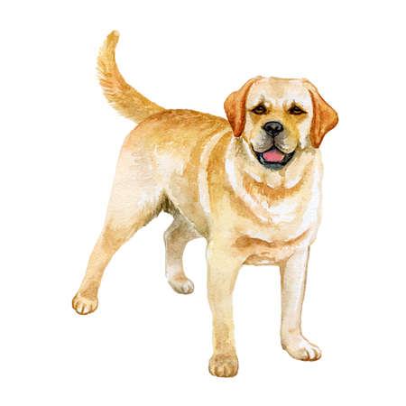 Acuarela closeup retrato de Golden Retriever perro de raza aislado en fondo blanco resumen. Perro de gran tamaño de armas largas en Escocia. Animal doméstico casero dulce dibujado mano. Diseño de la tarjeta de felicitación. Clipart
