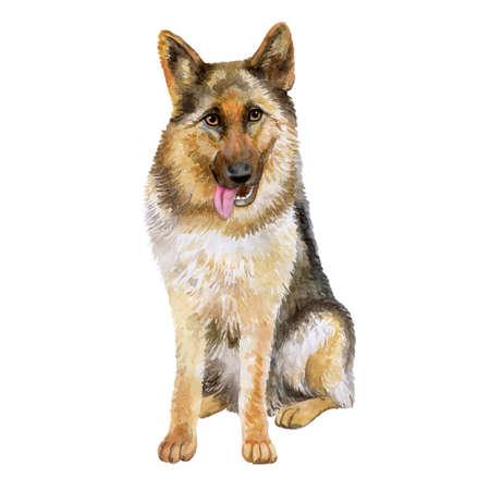 Aquarel close-up portret van grote Duitse herder RAS hond geïsoleerd op een witte achtergrond. Grote langharige werkhond uit Duitsland. Hand getekend zoet huis huisdier. Begroeting verjaardagskaart ontwerp. Clip art