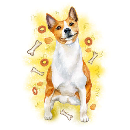Watercolor closeup portrait of cute Basenji breed dog isolated on abstract background. Shorthair African Barkless Dog hound type hunting dog. Hand drawn sweet home pet. Greeting card design. Clip art Stock Photo