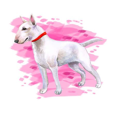 Aquarell Großansicht Porträt von niedlichen Englisch Bull Terrier Zuchthund isoliert auf abstrakte rosa Hintergrund. Englischer Kurzhaar-Terrier-Familienhund. Handgezeichnete süße Hause Haustier Grußkarte Design ClipArt Standard-Bild - 85944880