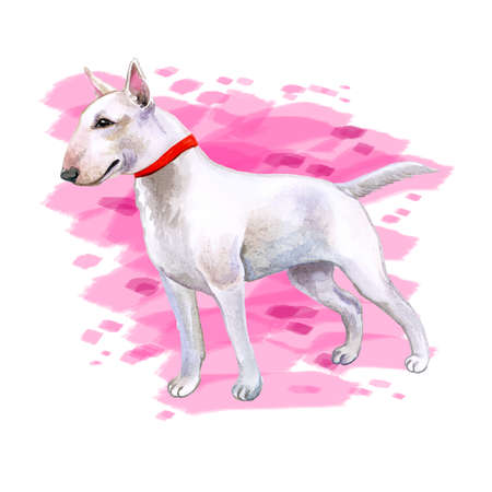 Watercolor closeup portrait of cute English Bull Terrier breed dog isolated on abstract pink background. English shorthair terrier family dog. Hand drawn sweet home pet greeting card design clip art Zdjęcie Seryjne - 85944880