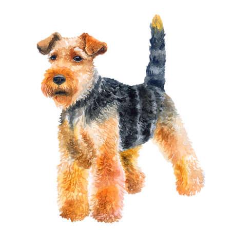 Ritratto del primo piano dell'acquerello del simpatico cane di razza Welsh terrier isolato su sfondo verde. Cane di Welshie di caccia dello shorthair che posa all'esposizione canina. Animale domestico disegnato a mano dolce casa. Disegno di auguri. Clip art Archivio Fotografico - 85889727
