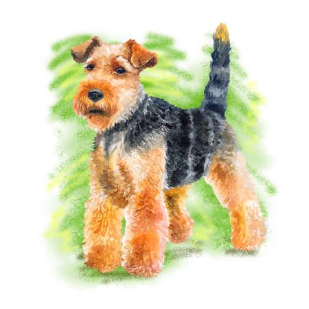 Aquarel close-up portret van schattige Welsh terrier rashond geïsoleerd op groene achtergrond. Korthaar jagen Welshie hond die zich voordeed op hondenshow. Hand getekend zoet huis huisdier. Wenskaart ontwerp. Clip art Stockfoto - 85889728