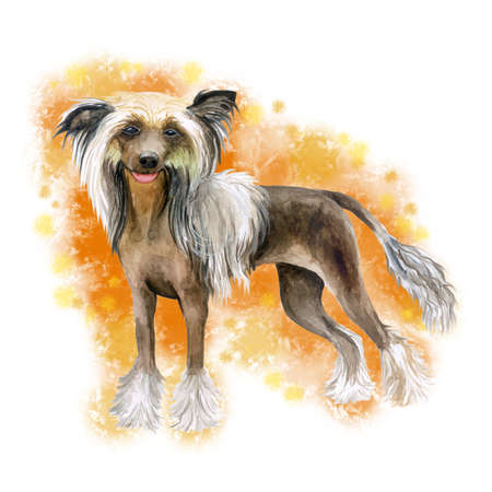 Watercolor closeup portrait of cute Chinese crested breed dog isolated on abstract orange background. Hairless dark skin dog showing tongue. Hand drawn sweet home pet. Greeting card design. Clip art