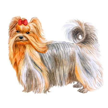 かわいいヨークシャー テリア犬は、白い背景で隔離の水彩のクローズ アップの肖像画。テリア型の小型犬種。手描きの甘いホーム ペット。グリー 写真素材