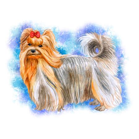 青の背景に分離されたかわいいヨークシャー テリア犬のポートレート、水彩のクローズ アップ。テリア型の小型犬種。手描きの甘いホーム ペット