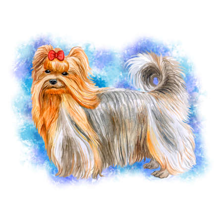 Watercolor closeup portrait of cute Yorkshire Terrier breed dog isolated on blue background. Small dog breed of terrier type. Hand drawn sweet home pet. Greeting card design. Clip art illustration