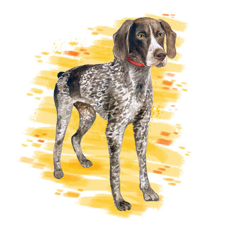 Watercolor close up portrait of cute German Shorthaired Pointer breed dog isolated on abstract background. Medium to large size hunting dog. Hand drawn sweet home pet. Greeting card design. Clip art