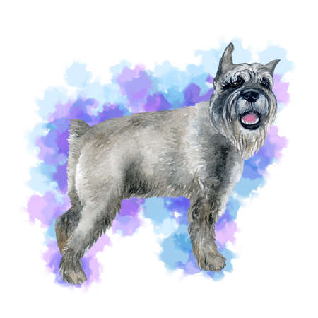 Watercolor closeup portrait of cute grey standard Schnauzer breed puppy isolated on abstract background. German moustache terrier-type dog. Hand drawn sweet home pet. Greeting card design. Clip art Zdjęcie Seryjne