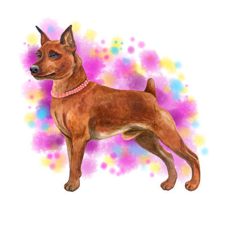 drawing pin: Watercolor closeup portrait of cute Miniature Pinscher breed dog isolated on abstract background. Shorthair small pinscher with cropped ears. Hand drawn sweet home pet. Greeting card design clip art
