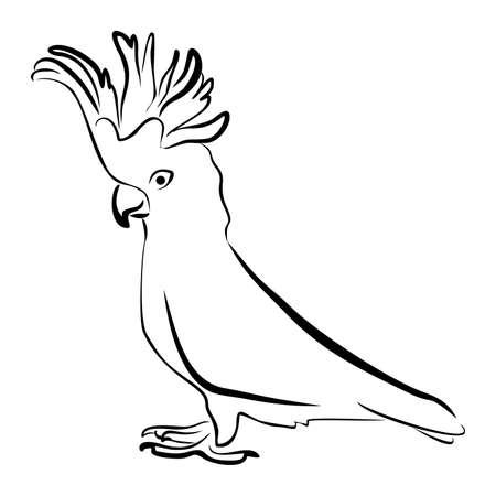 Hand getekende papegaai met kam. Stock Illustratie