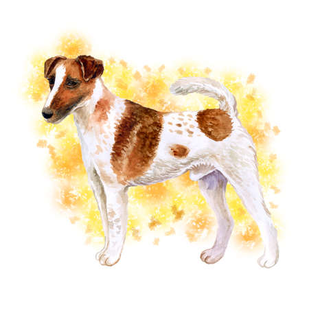 Watercolor closeup portrait of cute Fox Terrier Smooth breed dog isolated on abstract background. Shorthair small hunting dog posing at dog show. Hand drawn home pet. Greeting card design. Clip art