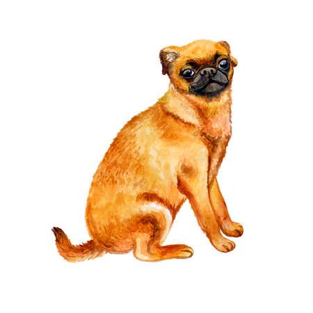 かわいいぷち Brabancon 犬は、白い背景で隔離の水彩のクローズ アップの肖像画。ショートヘア小さい茶色犬ドッグショーでポーズします。手描きの
