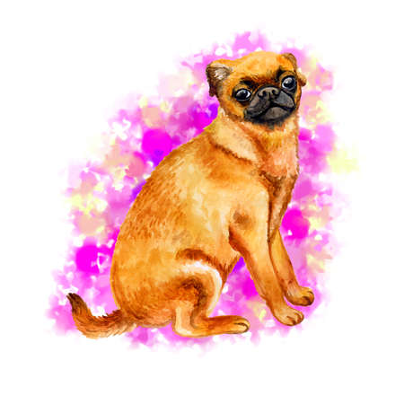 Watercolor closeup portrait of cute Petit Brabancon breed dog isolated on abstract pink background. Shorthair small brown dog posing at dog show. Hand drawn home pet. Greeting card design. Clip art
