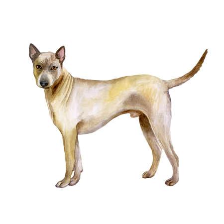 背景色が水色に分離されたかわいいタイ ・ リッジバック ・犬のポートレート、水彩のクローズ アップ。滑らかなショートヘア大規模な狩猟犬がド 写真素材