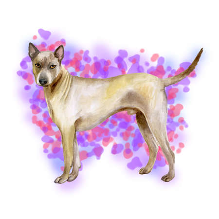 Watercolor closeup portrait of cute Thai Ridgeback breed dog isolated on abstract background. Smooth shorthair large hunting dog posing at dog show. Hand drawn home pet. Greeting card design clip art