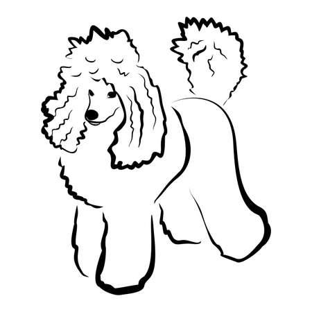 흰색 배경에 고립 된 아름 다운 킹 푸들 강아지의 벡터 근접 촬영 초상화. 머리 개가 강아지 쇼에 포즈 잘라. 손으로 그린 달콤한 집 애완 동물입니다.