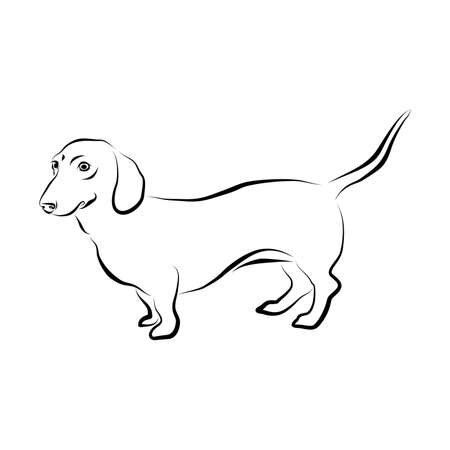 Vector closeup portrait of smooth german Dachshund dog isolated on white background. Popular short-legged, long-bodied, hound-type dog breed. Hand drawn home pet. Greeting card design. Ilustração