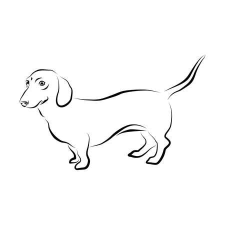Vectorclose-upportret van vlotte Duitse Tekkelhond die op witte achtergrond wordt geïsoleerd. Populair, kortbenig, lang gebouwd, hondenras van het hondenras. Hand getrokken huis huisdier. Wenskaart ontwerp. Stock Illustratie