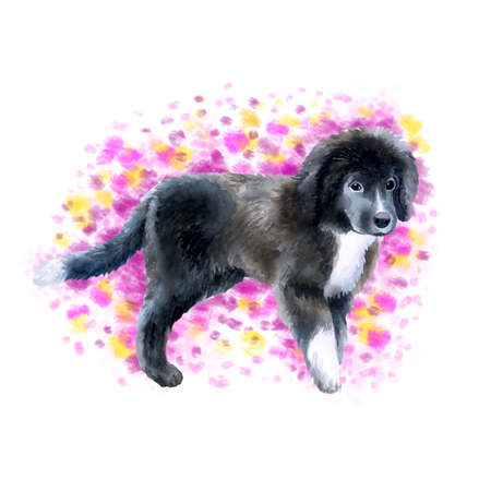 Watercolor closeup portrait of cute Newfoundland breed puppy isolated on abstract background. Longhair large working dog posing at dog show. Hand drawn sweet home pet. Greeting card design clip art