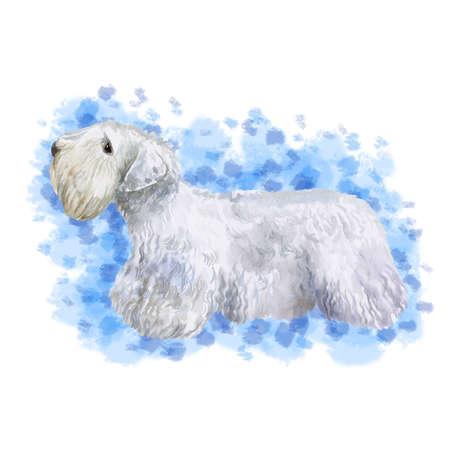 珍しいウェールズシーリハムテリア繁殖犬の水彩画クローズポートレート抽象的な背景に分離されました。長髪犬ショーでポーズをするミディアム
