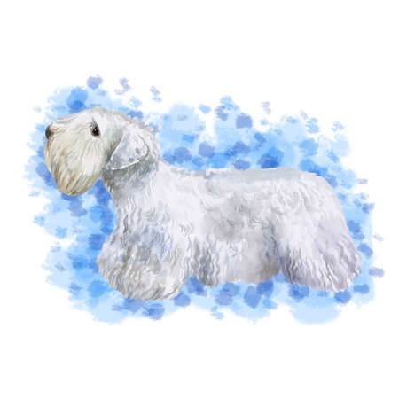 Watercolor closeup portrait of rare Welsh Sealyham Terrier breed dog isolated on abstract background. Longhair medium working dog posing at dog show. Hand drawn home pet. Greeting card design clip art