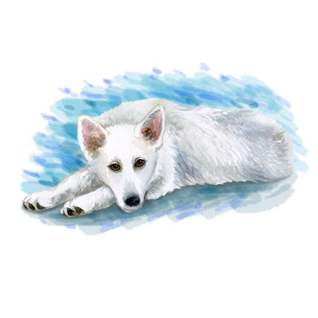 Watercolor closeup portrait of large White Shepherd breed dog isolated on blue background. Large longhair hering dog lying on floor. Hand drawn sweet home pet. Greeting birthday card design. Clip art Фото со стока