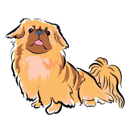 ベクトル白い背景に分離された中国のペキニーズ犬のポートレート、クローズ アップ。ふわふわグッズ犬示す舌。手描きの甘いホーム ペット。人気  イラスト・ベクター素材