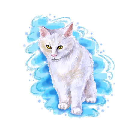 Watercolor close up portrait of american longhair Maine Coon cat breed isolated on blue background. Rare pure white coloration. Hand drawn home pet Greeting birthday card design clip art illustration Stock Photo